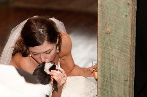Bride kissing her dog