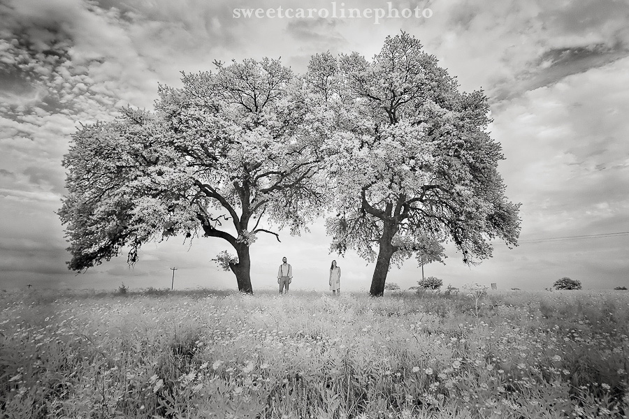 black and white image of engaged couple under a tree