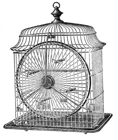 vintage birdcage print