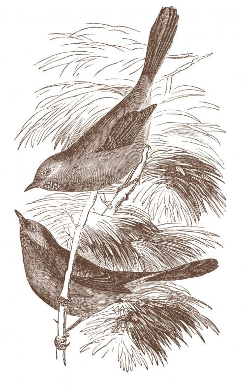 sepia vintage bird print