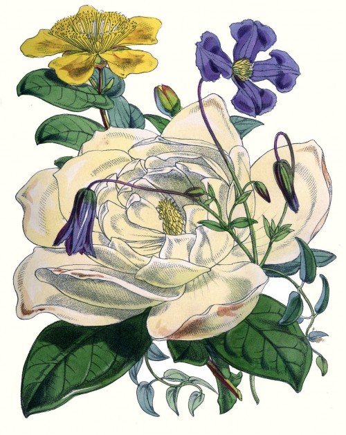 vintage flower botanical print