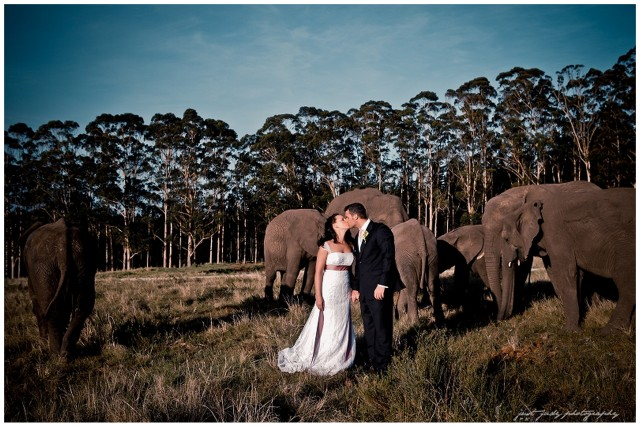 Elephant Park Wedding