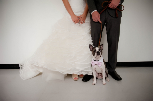Canmore bride and groom with their dog