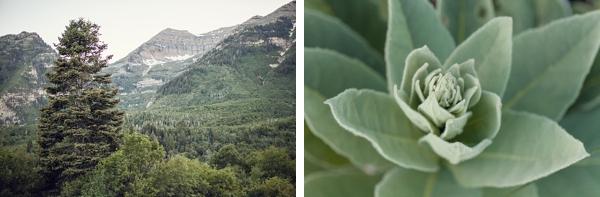 12-woodland-inspired-engagement-shoot-Tyler_Rye_Photography