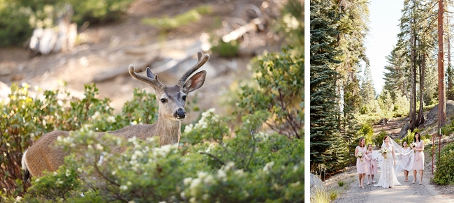 deer sequoia national park wedding