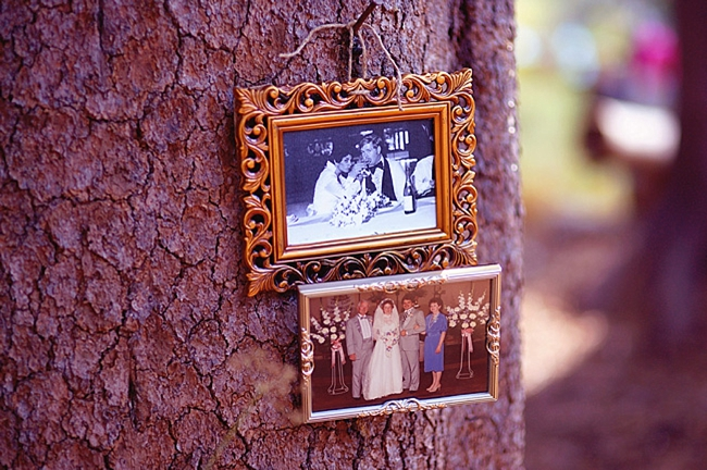 framed vintage wedding pictures hanging from a tree
