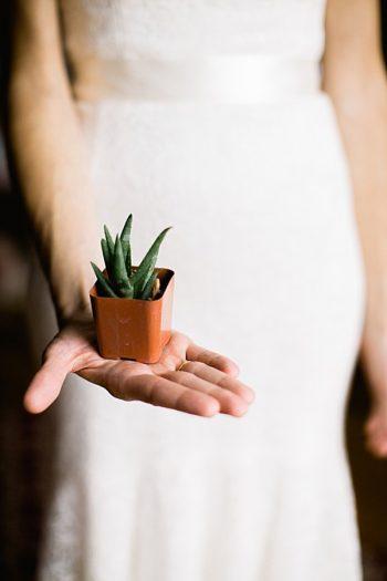 succulent favor