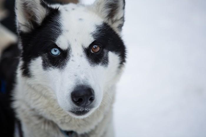 Winter dog sled elopement | Sarah Roshan