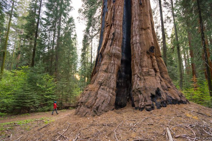 Getting married in Sequoia National Park | Big Trees Trail 01
