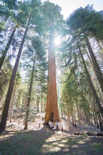 Getting married in Sequoia National Park | North Grove Loop 01