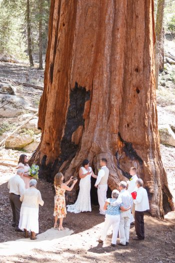 Getting married in Sequoia National Park | North Grove Loop 02