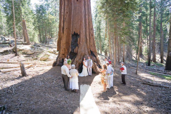 Getting married in Sequoia National Park | North Grove Loop 03