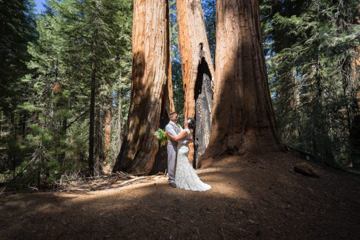 Getting married in Sequoia National Park | North Grove Loop 04