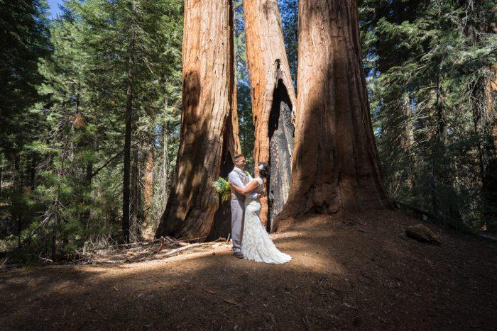 Getting married in Sequoia National Park | North Grove Loop 04