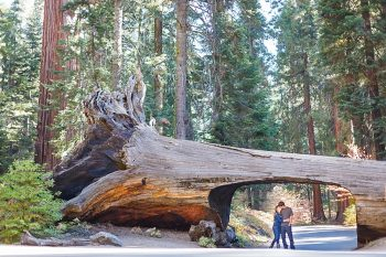 26 Camping Engagment Weekend | Bergreen Photography | Via MountainsideBride.com