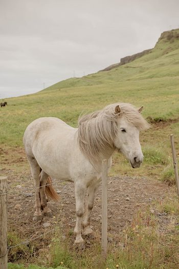 13 Iceland Elopement Photos By Miss Ann |via MountainsideBride.com