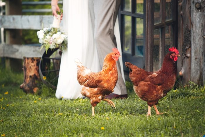 2 Chickens At A Wedding Sandpoint Idaho Mountain Wedding Amy Galbraith Photography | Via MountainsideBride.com