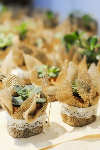 Succulent Favors Park City Wedding | Pepper Nix Photography | Via MountainsideBride.com
