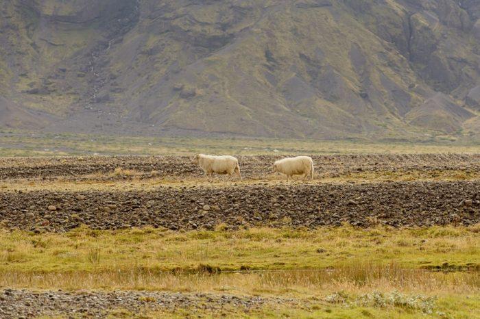 14 IcelandEngagement Your Adventure Weddin