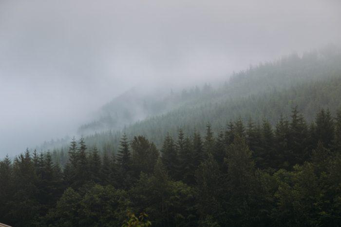 1 Woodland Washington Engagement Session Katie Day Photos Via Mountainsidebride Com