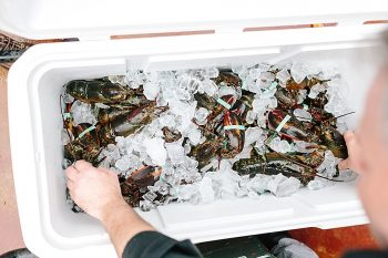15 Lobster | Vermont Fall Wedding | Lex Nelson Photography | Via MountainsideBride.com
