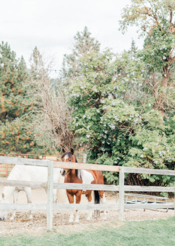A Warm Homestead Wedding In Washington Something Minted Photography21