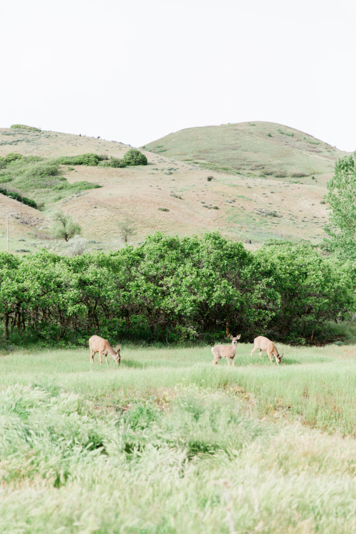 Southern Charm Wedding Inspiration In The Utah Mountains Moose Studio15
